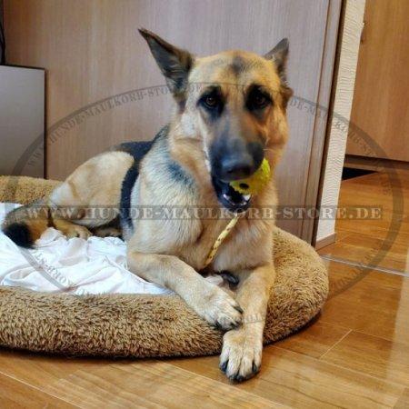 Hundeball Spielzeuge für Hunde