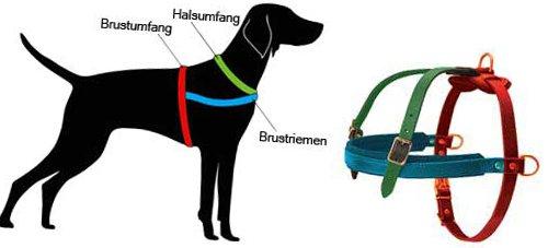 Anweisung zum Ausmessen von Hundegeschirr mit Brustgurt