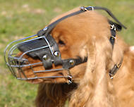Wire Dog Muzzle for English Cocker Spaniel Everyday
