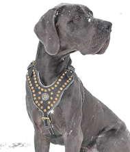 Deutsche doggen halsband