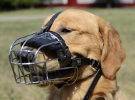 Wire Dog Muzzle for Golden Retriever Bestseller 2020