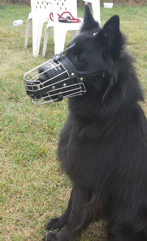 Padded Cage Muzzle for Shepherd