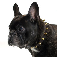 Dog Collar for Fr. Bulldog | Leather Collar with Spikes