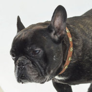 Fr. Bulldog Collar Exclusive | Studded Dog Collar for Bulldog