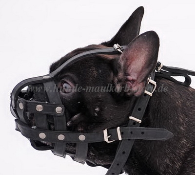 The Muzzle for French Bulldog M41 R