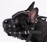 Dog Muzzle Leather Padded | Frendch Bulldog Muzzle Extra Light!
