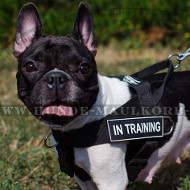 All-weather Dog Harness for French Bulldog | Nylon Harness