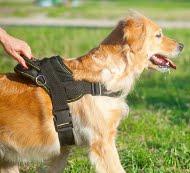 Hunde Geschirr Nylon | Geschirr für Golden Retriever