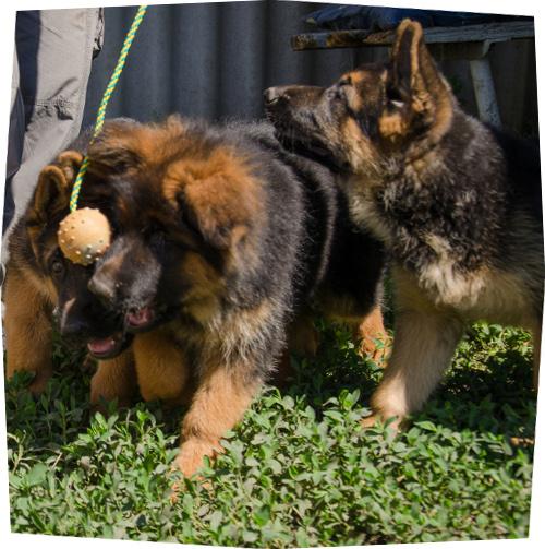 Gummiball für welpen cm spielzeug kleine hunderassen