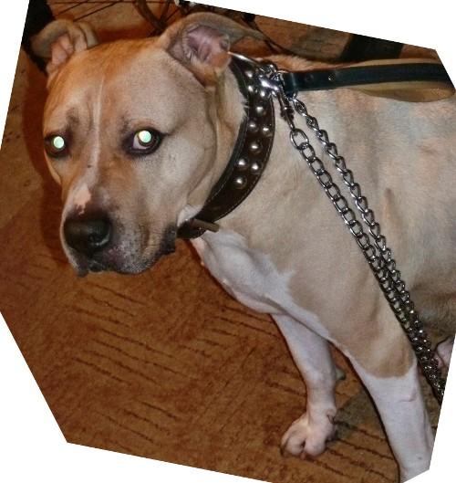 Kettenleine aus Stahl für Auslauf mit großen Hunden