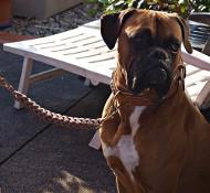 Hundehalsband + Leine | Hundeleine & Halsband Geflochten ?