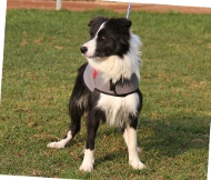 Hundemantel für Border Collie | Wasserdichter Umhang ❉