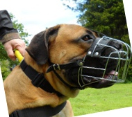 Wire Dog Muzzle for Boerboel Bestseller 2020