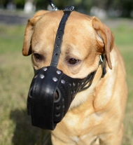 "Leather Dog Muzzle for Labrador ""Dondi plus"""