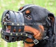Muzzle Leather for Rottweiler | Muzzle with Perfect Ventilation