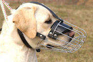 Wire Basket Muzzle for Labrador | Cage Dog Muzzle for Retriever