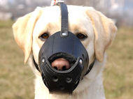 Labrador Everyday Leather dog muzzle