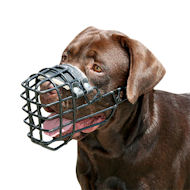 Basket Dog Muzzle for Labrador, Covered by Black Rubber