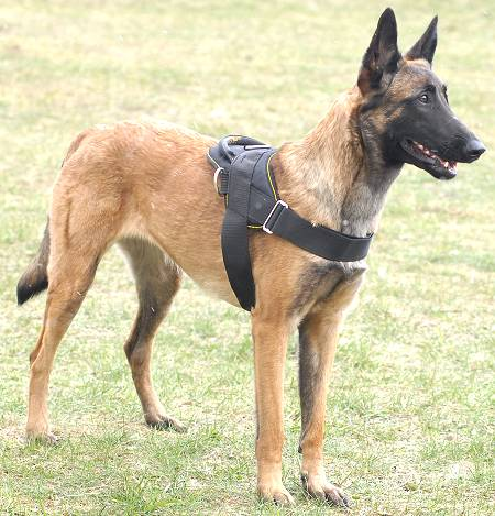 Working Dog Harness additionally 1549 besides 281725905532 as well Protective K 9 Ballistic Vests as well Tactical Tracking Harness. on police k9 tracking harness