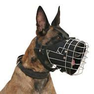 Haus Bauen Hundehaufen Verhindern