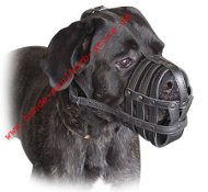 Cane-corso Everyday Light Weight Ventilation Dog muzzle