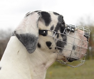 Wire Dog Muzzle for Great Dane | Free Drinking!