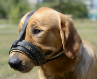 Leather Dog Muzzle for Labrador - Nappa Comfort!