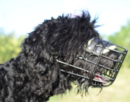 Wire Muzzle for Black Terrier, Winter Cage Muzzle 2015!