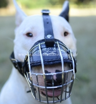 Wire Dog Muzzle for Bull Terrier Bestseller 2020