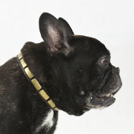 Studded Collar for Fr. Bulldog | Leather Collar with Plates