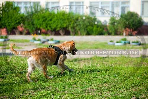 Golden Retriever Hunde Geschirr Nylon