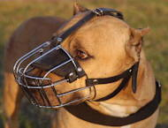 Wire Basket Dog Muzzle for Pitbull