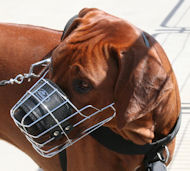Best Wire Basket Dog Muzzle for Rhodesian Ridgeback, Cage Muzzle