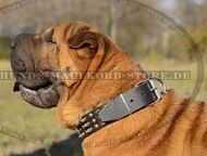 Shar-Pei leather collar hand decorated