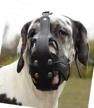 Leather Muzzle Attack | Great Dane Muzzles with Ventilation
