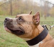 Extra wide Amstaff leather collar