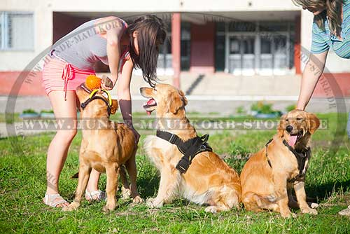 /images/Wasserdichtes-Nylon-Hundegeschirr-fuer-Retriever.jpg