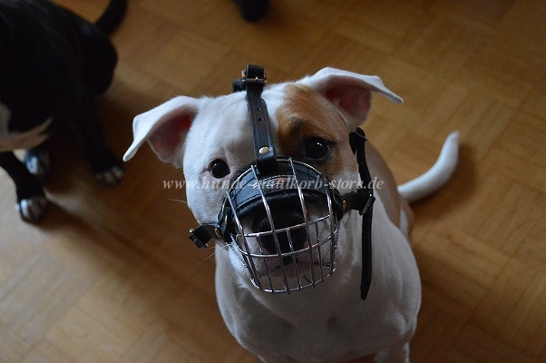 wire muzzle for amstaff
