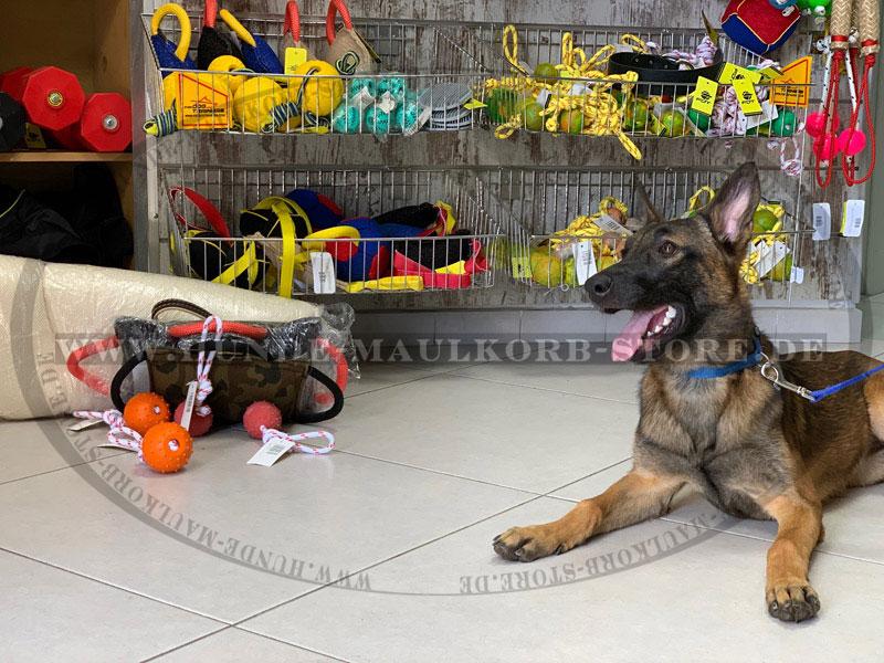 Top-Hundespielzeuge für großen Spaß bei Hunden