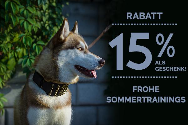 Hundehalsband aus Leder und Nylon kaufen Rabatt