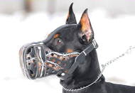 """Barbed Wire"" Hand painted leather dog muzzle"