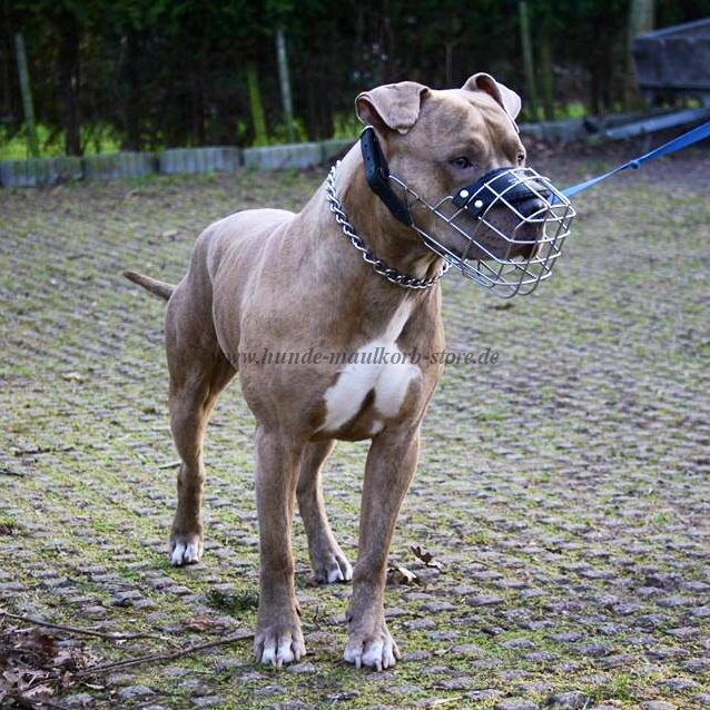 nice wire dog muzzle for Amstaff