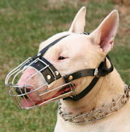 Wire Basket Dog Muzzle for Bull Terrier | Best Dog Muzzle