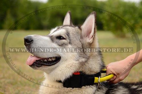 Halsband mit Griff aus Nylon für Hunde