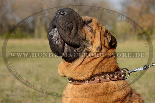 Klassisches Lederhalsband für Hunde ohne Griff