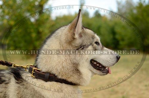 Hundehalsband aus Leder oder aus Nylon. Was ist besser?