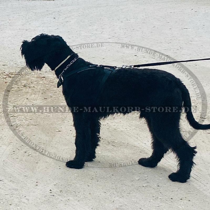 Hundehalskette aus verchromtem Stahl für große Hunde