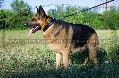 Hunde Halsband Leder mit Namenschild