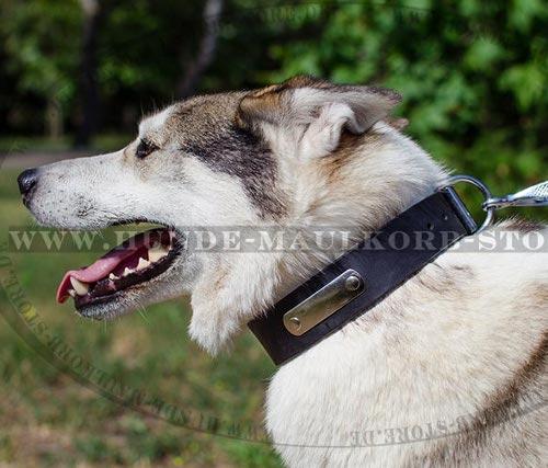Hundehalsband mit Namen Schild für sicheren Hundeauslauf