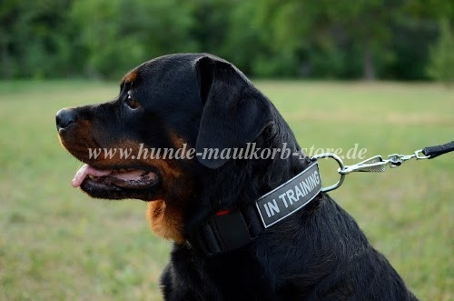 Rottweiler dog collar Nylon with patch for